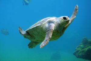 turtle-691040_1280